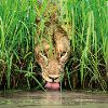 Wildlife Photographer of the Year #54